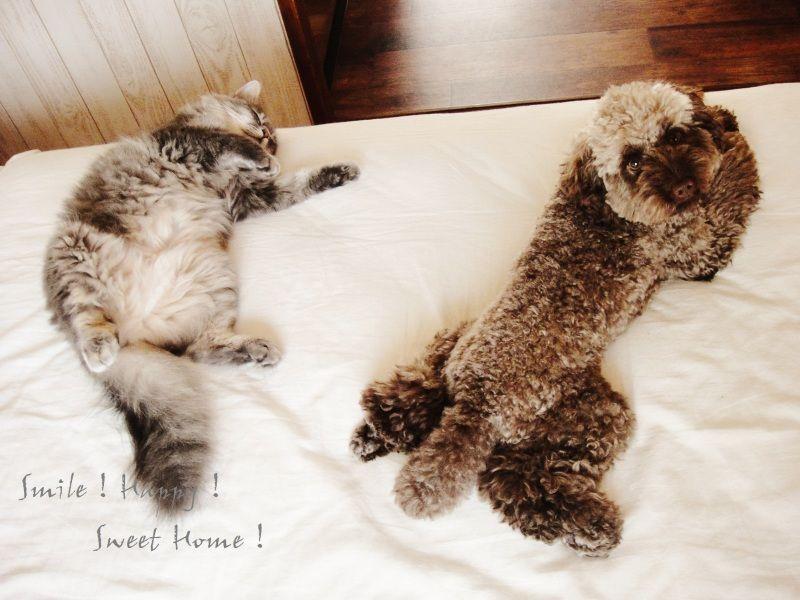 Smile! Happy! Sweet Home!