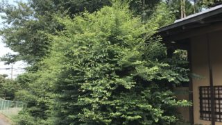 庭木剪定DIY