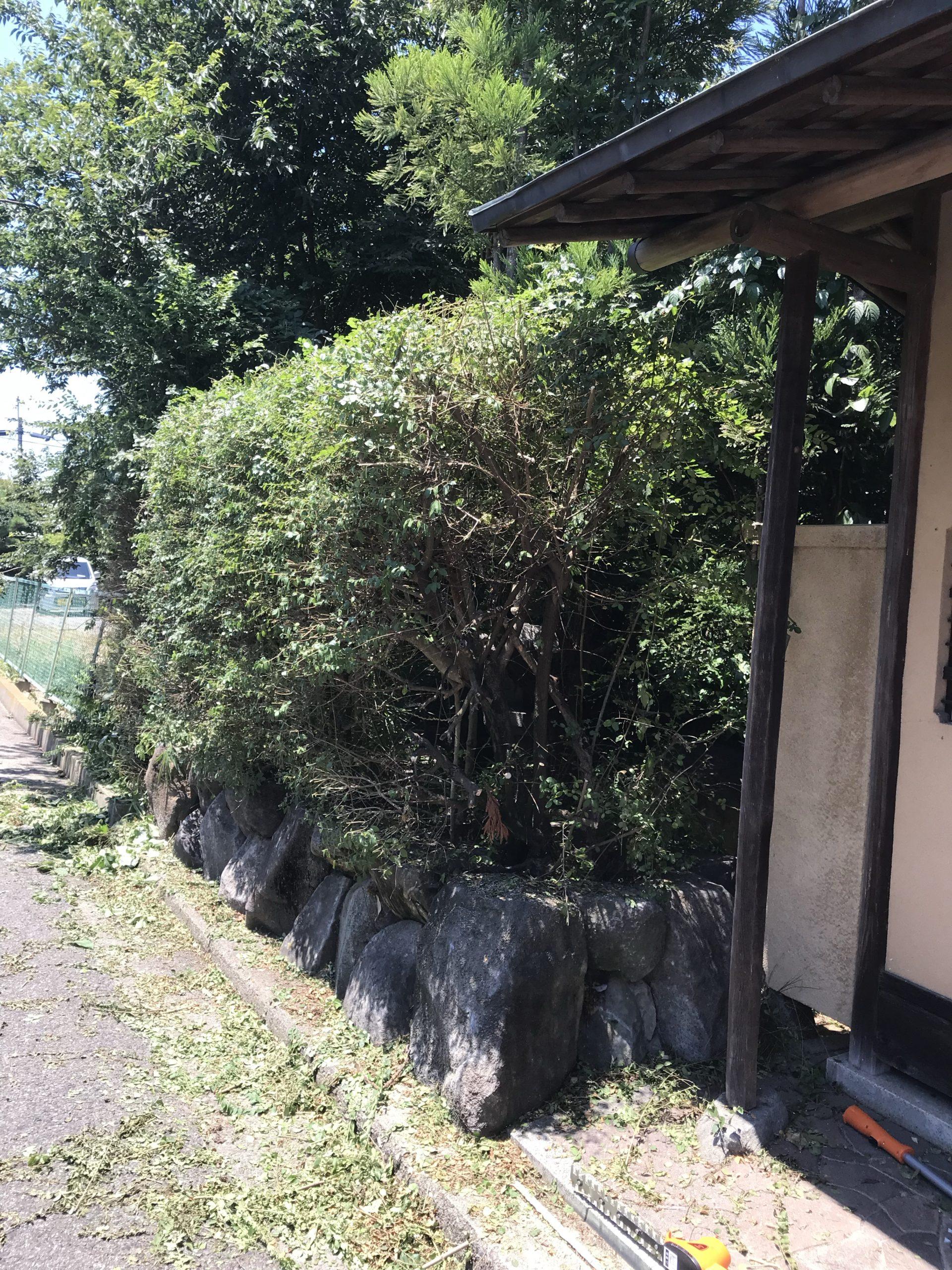 庭木の剪定DIY
