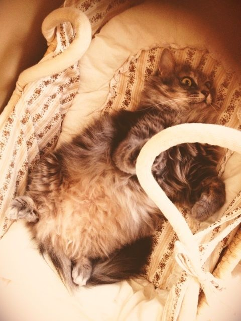 猫の糖尿病