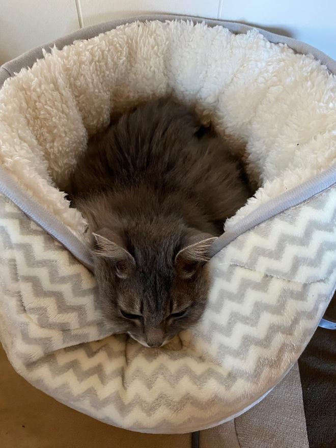 ニトリのペットベッドが猫をダメにする