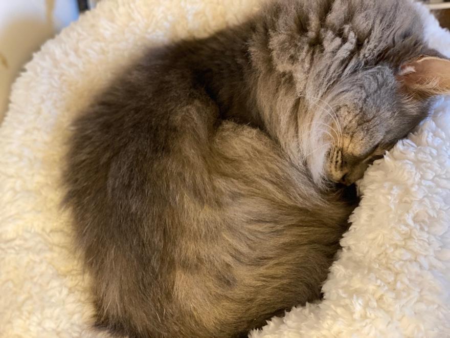 ニトリのNウォームペットベッドが猫をダメにする