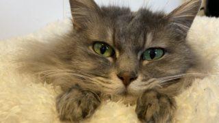 猫の糖尿病との付き合い方